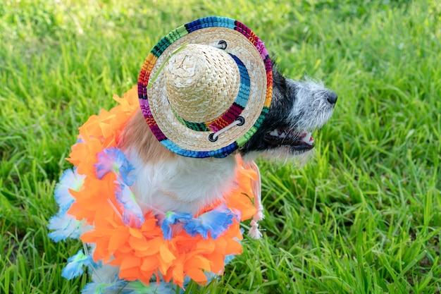 ソンブレロとハワイの花輪のジャックラッセルテリアの子犬の肖像画