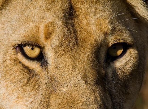 Портрет львицы. крупный план. кения. танзания. масаи мара. серенгети.