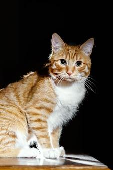 Портрет маленького рыжего полосатого котенка, кота на черной поверхности