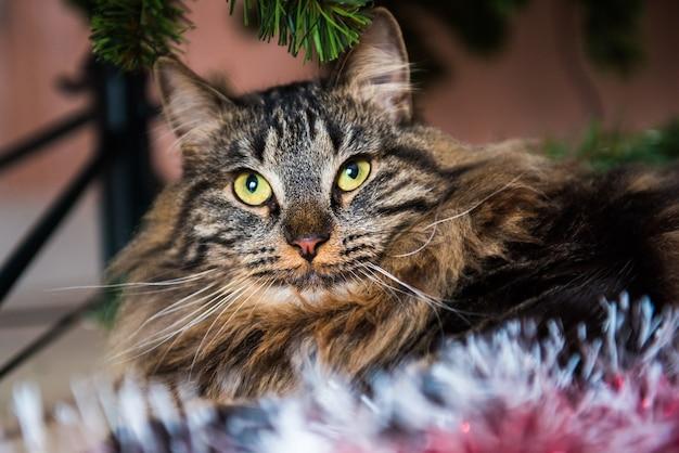 Портрет милой кошки, глядя в сторону