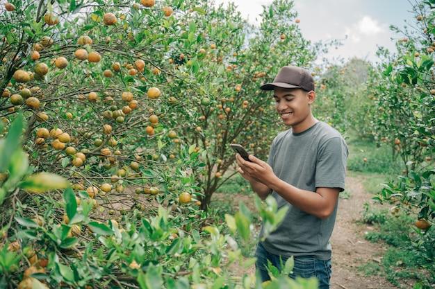 オレンジの状態をチェックし、オレンジの木の畑で携帯電話でメモした男性農家の肖像画