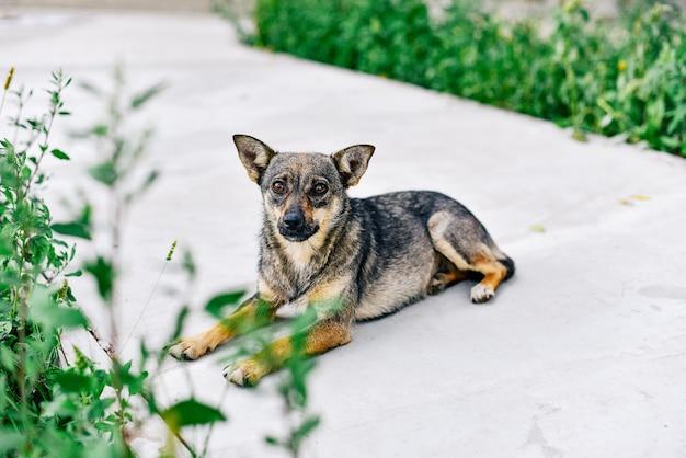 Портрет крупным планом дворняга собака. врет дворняга. собака, домашнее животное