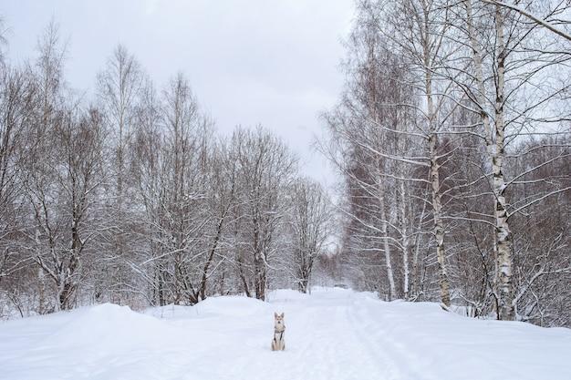 Портрет беспородной собаки, сидящей на снегу и смотрящей в камеру зимой.