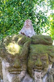 Портрет обезьяны, сидящей на каменной скульптуре в священном обезьяньем лесу в убуде, остров бали, индонезия. закрыть вверх
