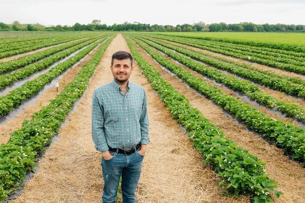 Портрет симпатичного современного молодого фермера, улыбающегося с руками в кармане на урожае клубники на заднем плане, красивых и здоровых людей-фермеров
