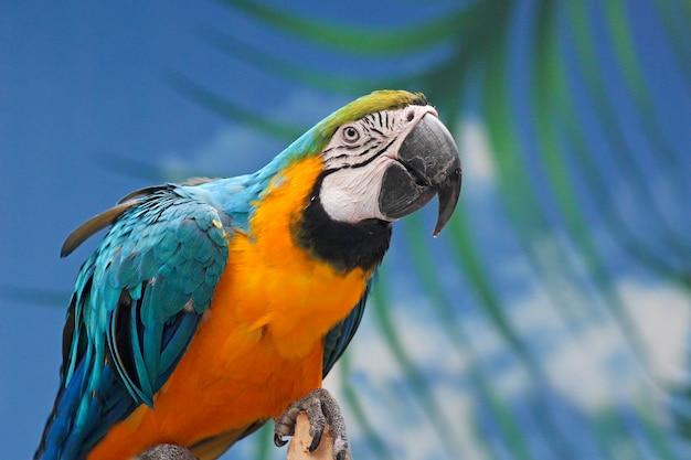동물원에서 앵무새의 초상화