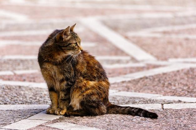 Портрет красивой кошки сидит на земле