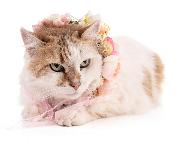 Портрет красивой кошки с цветами на белом фоне