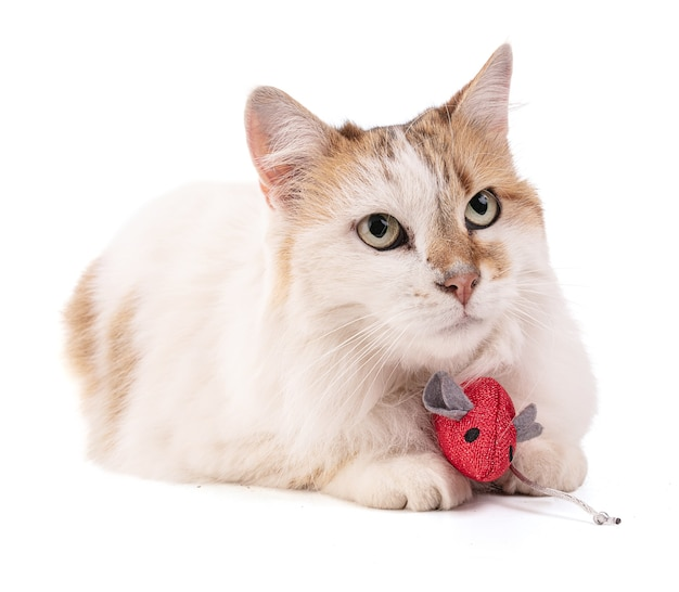 孤立した赤いマウスとかわいい猫の肖像画