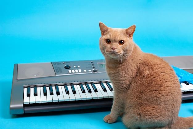 Портрет рыжего британского кота, сидящего перед серым электронным синтезатором