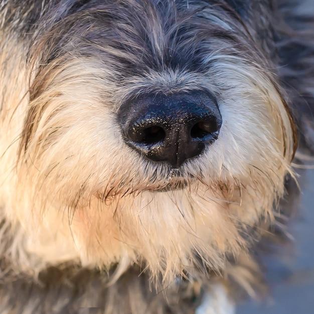 散歩中の毛むくじゃらの犬の雑種の肖像画