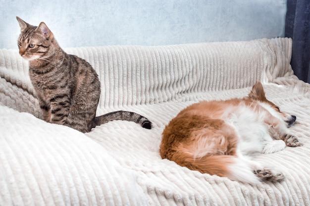 Портрет спящей собаки и сидящей рядом с ней кошки. понятие дружбы кошки и собаки