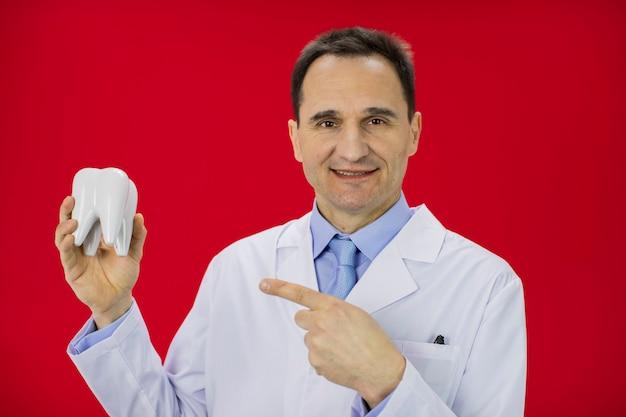 빨간 벽에 고립 된 치아 모델을 들고 웃는 치과 의사의 초상화