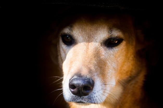 거리에서 동물 학대를 겪고있는 길 잃은 강아지의 초상화