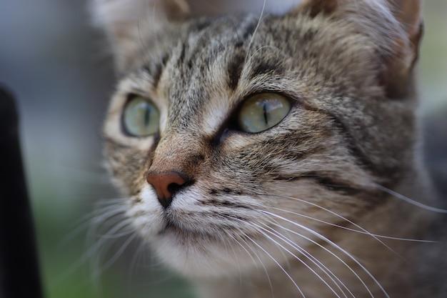 屋外で晴れた日にポーズをとる縞模様の飼い猫の肖像画