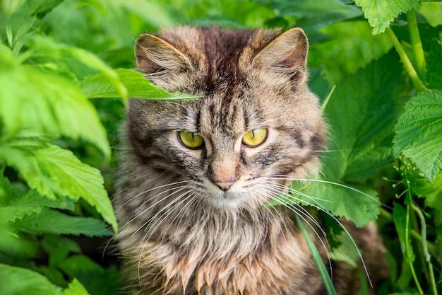 濃い緑に囲まれた縞模様のふわふわ猫のポートレート
