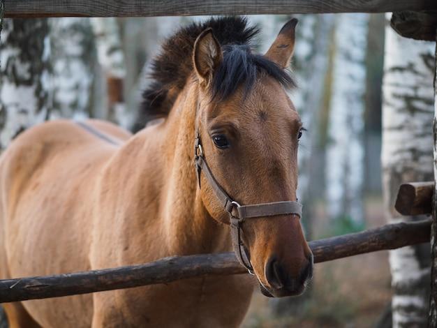 Портрет породистой лошади в вольере под открытым небом.