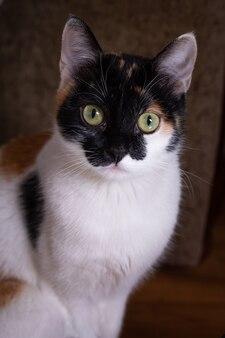 Портрет трехцветной кошки с желтыми глазами.