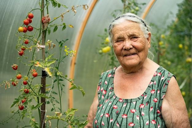 Портрет очень старой женщины, работающей в своем саду летом. бабушка сидит в теплице и выращивает помидоры. увлечения для пожилых людей.