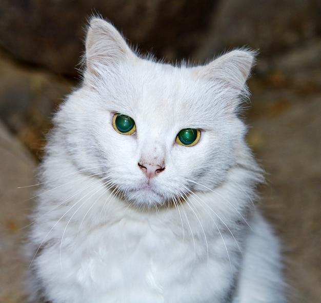자연 속에서 녹색 눈을 가진 흰 고양이의 초상화