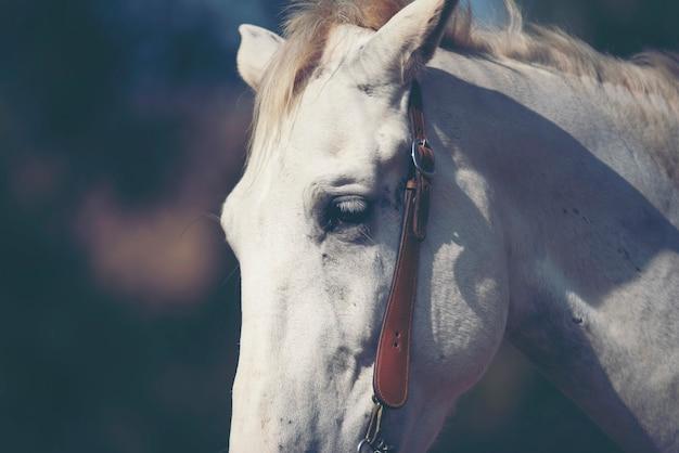 Портрет белой лошади на ферме