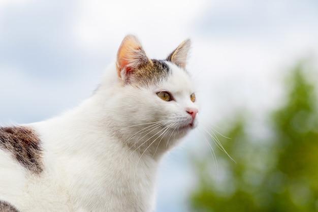 プロフィールの白い斑点のある猫の肖像画