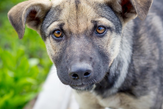 若い犬のクローズアップの肖像画。犬は楽しみにしています_
