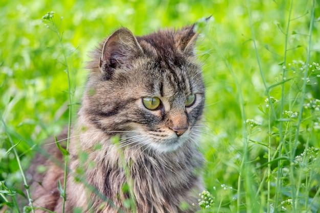 緑の草の中の若いふわふわ猫の肖像_