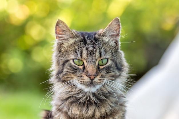 Bokeh_でぼやけた背景に若いふわふわ猫の肖像画