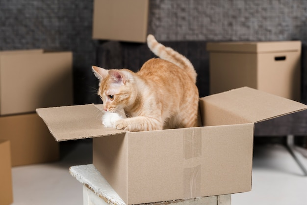Портрет очаровательной кошки внутри картонной коробки