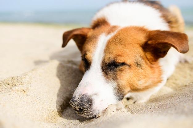 Портрет очаровательны собаки, наслаждаясь природой