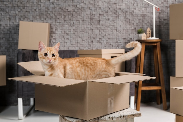 Портрет очаровательны семейного кота в помещении