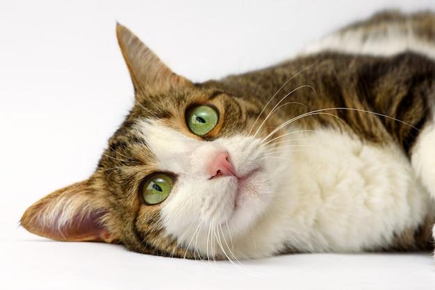 Портрет очаровательны котенка
