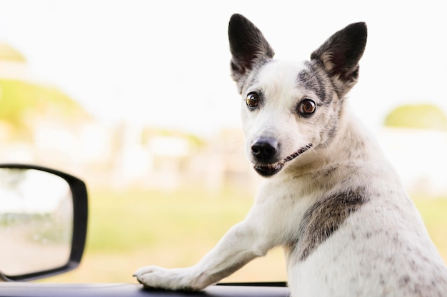 Портрет очаровательны маленькая собака