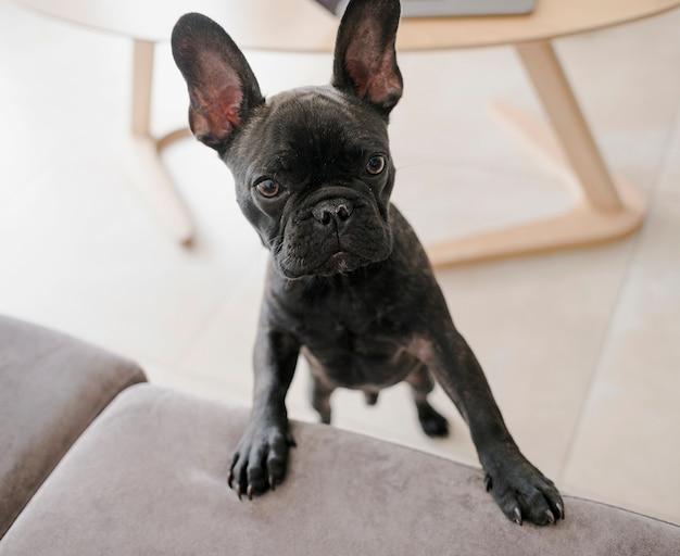 Портрет очаровательны маленькая собачка