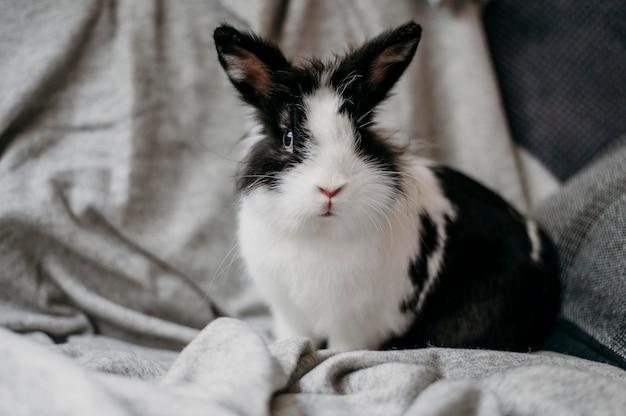 愛らしいウサギの肖像画