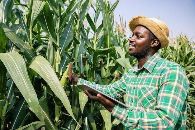 Портрет афро-американского фермера, стоящего с планшетом в кукурузном поле, изучающего урожай в голубом небе