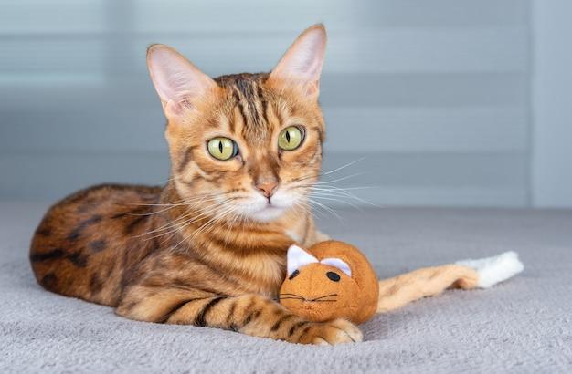 Портрет очаровательной домашней кошки с мягкой игрушкой.