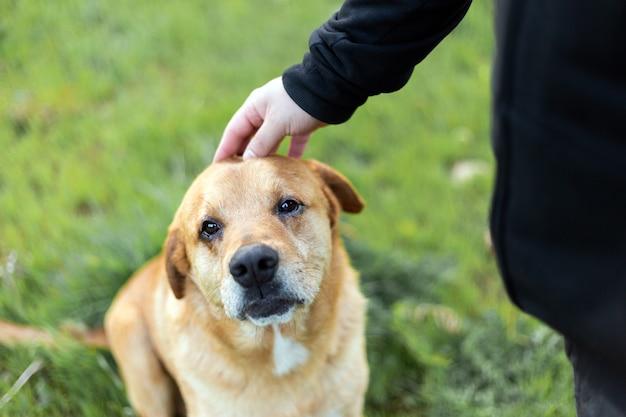 緑の公園で男の手で撫でられている愛らしい幸せな犬の肖像画