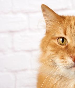 大人の赤い猫の肖像画