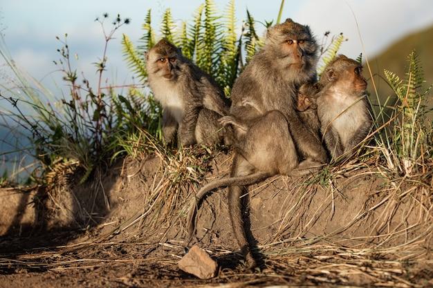 Портрет животного. дикая обезьяна. бали. индонезия