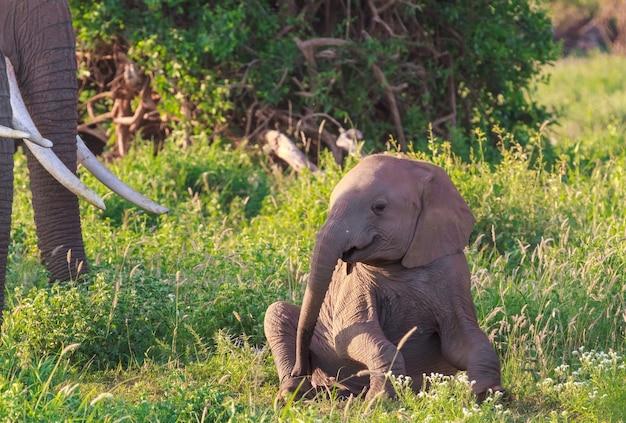 象の赤ちゃんの肖像画。ケニア、アンボセリ