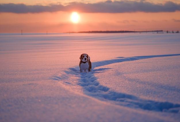 겨울 저녁에 일몰 배경에 비글 강아지의 초상화