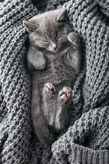 Портрет красивого серого котенка расслабляет сон на мягком сером связанном фоне. домашний питомец дремлет. котенок расслабляющий с поднятой лапой. счастливые домашние животные кошки сладкие сны. вид сверху.