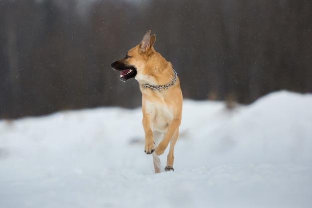 풀밭에서 아름 다운 빨간 개 강아지의 초상화. 개가 카메라 방향으로 뛰며 행복해 보입니다. witer 화창한 날. 나무