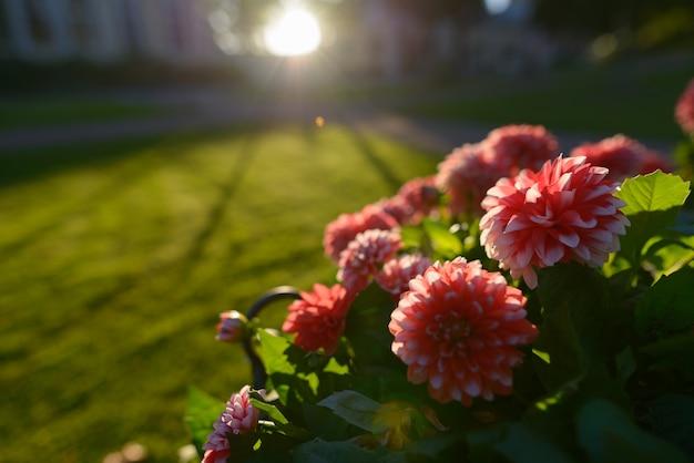 야외 자연에서 햇빛에 대한 흰색 팁과 아름다운 붉은 꽃의 초상화