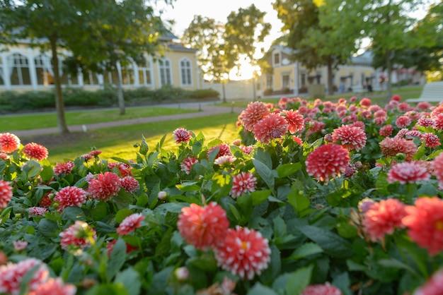 야외 정원에서 흰색 팁과 아름다운 붉은 꽃의 초상화