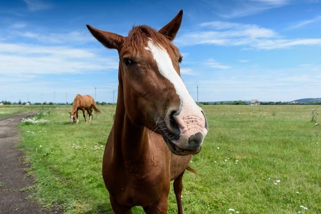 Портрет красивой красной лошади летом