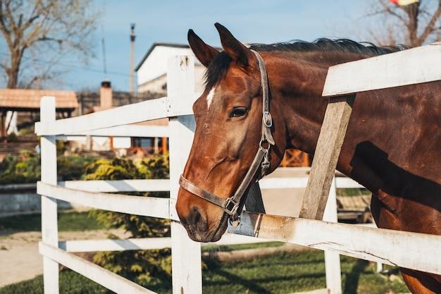 Портрет красивой рыжей лошади с белым пятном на носу