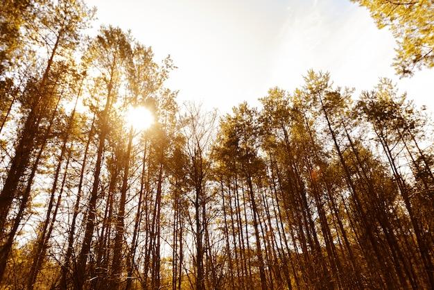 活気に満ちた時間の間に森の美しい晴れた日の肖像画